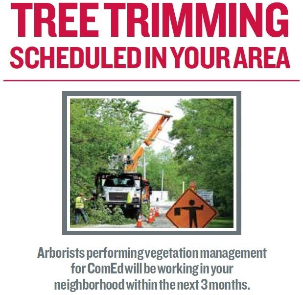 Tree Trimming photo - Copy